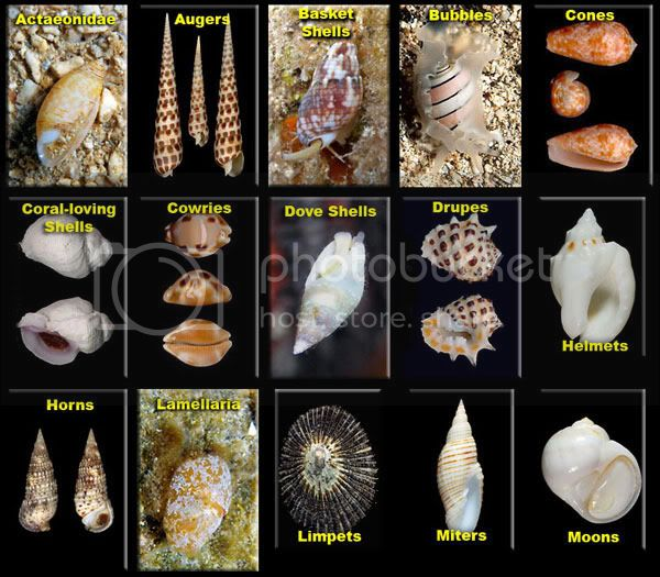 Shells 1